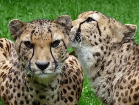 Journées Gratuites pour les enfants au Zoo de Jurques