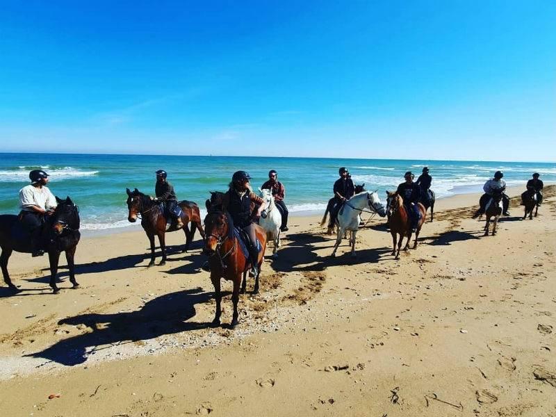 Cours, stages, promenades à cheval