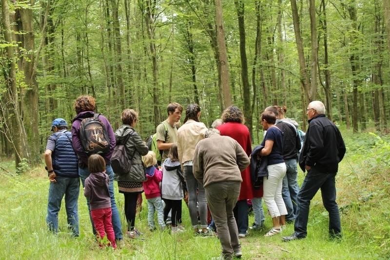 Les arbres et la gestion forestière en forêt de Cerisy